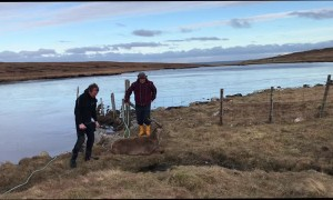 Stag Rescued From Frozen Loch