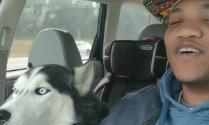 Husky Howls Along With I Love You