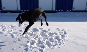 Doggy Puts on a Rodeo Show in the Snow