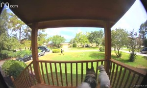 Delivery Man Evades Dogs on Deck
