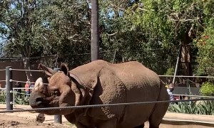 Zoo Onlookers Surprised by Rhino Appendage