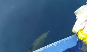 Friendly Dolphin Pod Swim Alongside Boat
