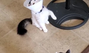 Ball Bounces into Cat Cone