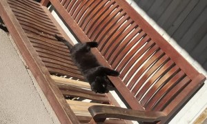 Kitty Scurries Away From Dog Sounds