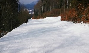 Skiing with a Bear on the Slopes