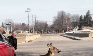 Tow Truck Lifts Car Off Trapped Deer