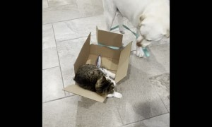 Doggy Takes Feline Friend on a Box Ride