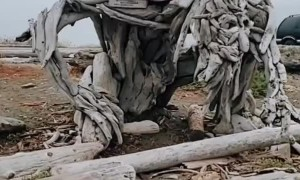 Artist Creates Stunning Driftwood Sculpture