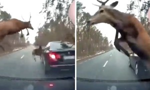 Cars caught in the middle of an epic deer stampede