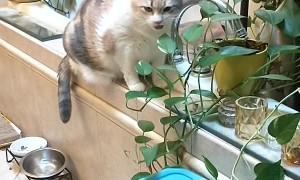 Cat Pretends to Chew on Plants
