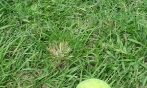 Doggo Grabs Ball at Light Speed