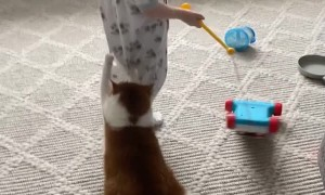 Senior Cat Drags Behind Laughing 1-Year-Old