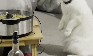 Cat Watches Popcorn Cook