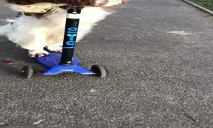 Park Pup Goes Scooting