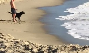 Playful Pup Plows into Waves