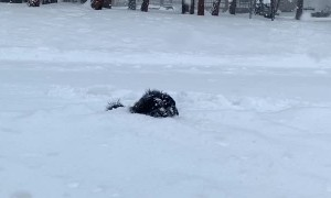 Puppy Dog Plays in Deep Snow