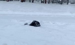 Puppy Dog Plays in Deep Snow