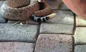 Rattlesnake Right Outside