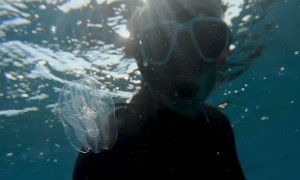 Diver Comes Face to Face with Beautiful Jellyfish