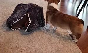 Doggy Dresses Itself up as Dinosaur