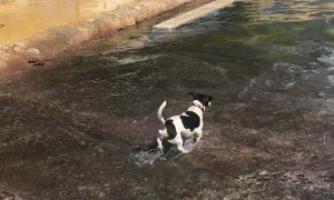 Puppy Dog Snatches Toy From Sea Lion