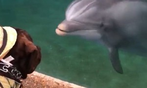 Service Dog Adorably Meets Friendly Dolphin