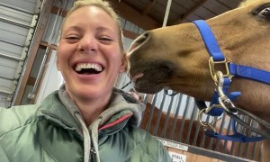 Horse Rubs Nose Against Lady's Ear