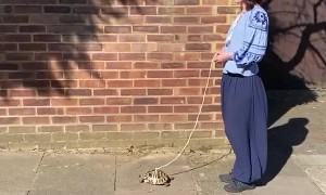 Taking Your Pet Tortoise For a Walk is Important