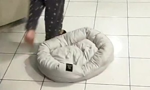 Puppy Plays Keep-a-Way with Owners Slipper