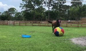 Horse Has a Blast Playing With Giant Ball