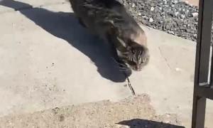 Cat Encounters 26 MPH Winds