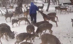 Feeding Wild Deer During Rare Texas Snowstorm