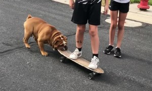 Kids Commandeer Dog's Skateboard