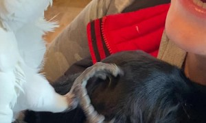 Parrot Meets Puppy for the First Time