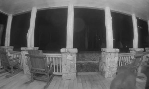 Two Bears Out of Hibernation Wrestle on Porch