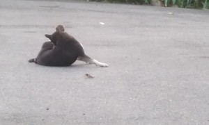Lonely Dog Finally Makes a Monkey Friend