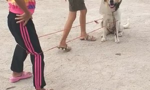 Dog Helps Girls with Game