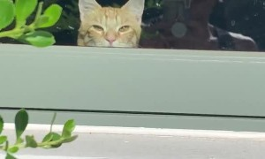 Sneaky Kitty Hides Behind the Windowsill