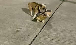 Bulldog is a Skateboarding Champion