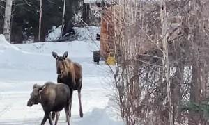 Happy Cat Wants to Meet Moose