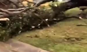 Tornado Tears Through Neighborhood