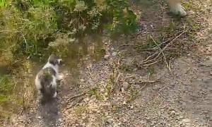 Kitten Tags Along for a Walk With Doggy