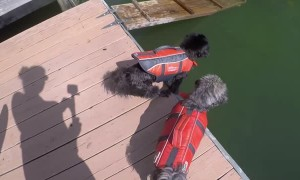 Timid Pup Takes a Dip off Dock