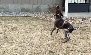 Pumped Pup Pops Bubbles