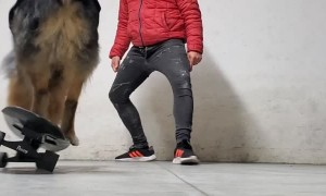 Impressive Pup Rides Skateboard with Skill
