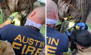 Firefighters rescue squirrel with head stuck in a tree