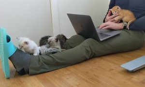 Working From Home With a Litter of Kittens