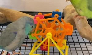 Hungry parrots love snacking on their delicious food