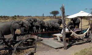 Wild Elephants Surprise Campers And Drink Water From Pool