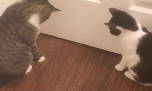 Kitties Battle Boredom by Booping Ball Back and Forth